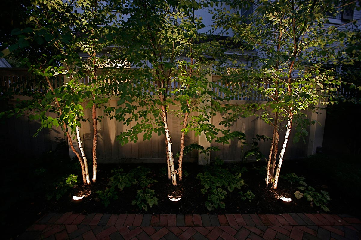 Landscape Up Lighting Ideas