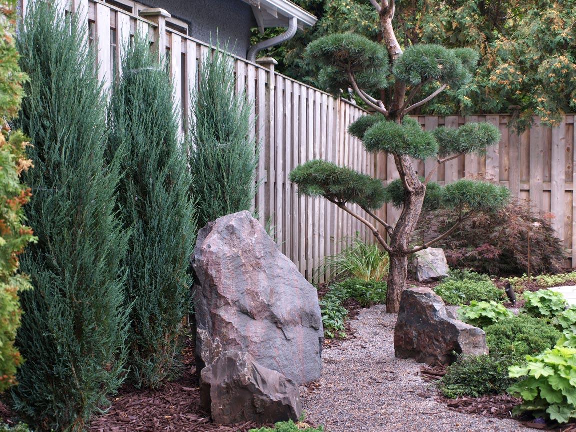 asian rock plantings