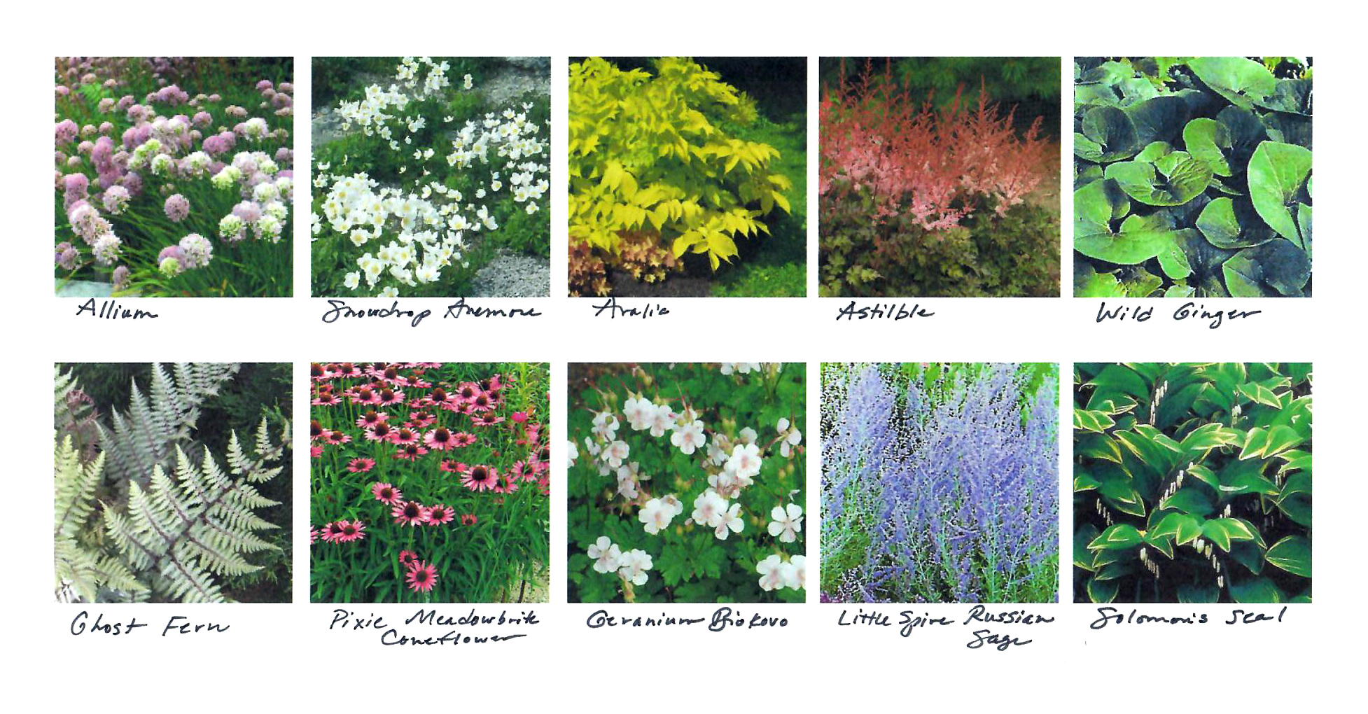 A Minneapolis Landscape Architects Top 10 Perennial Picks Ground One