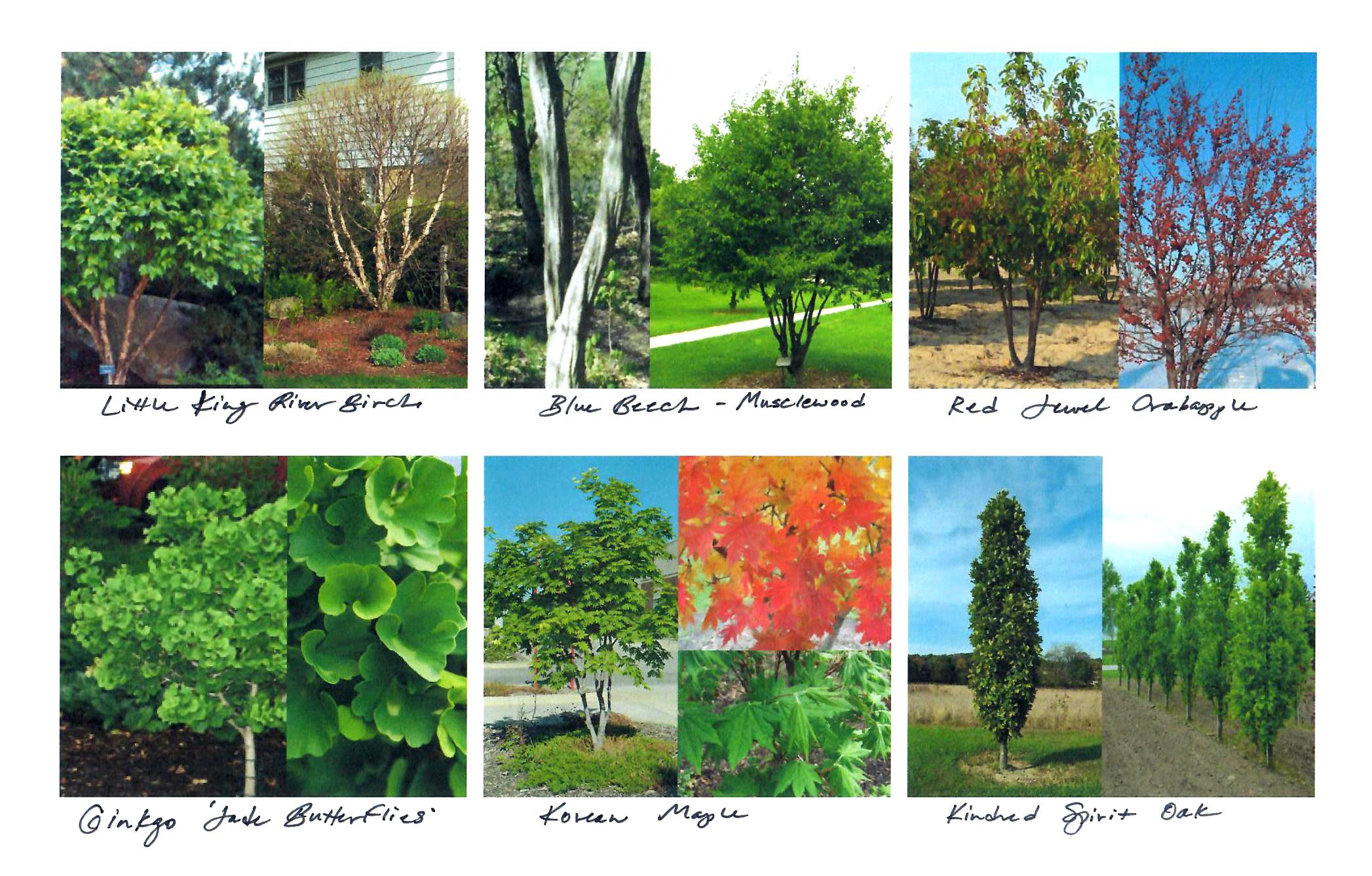 best trees for urban gardens