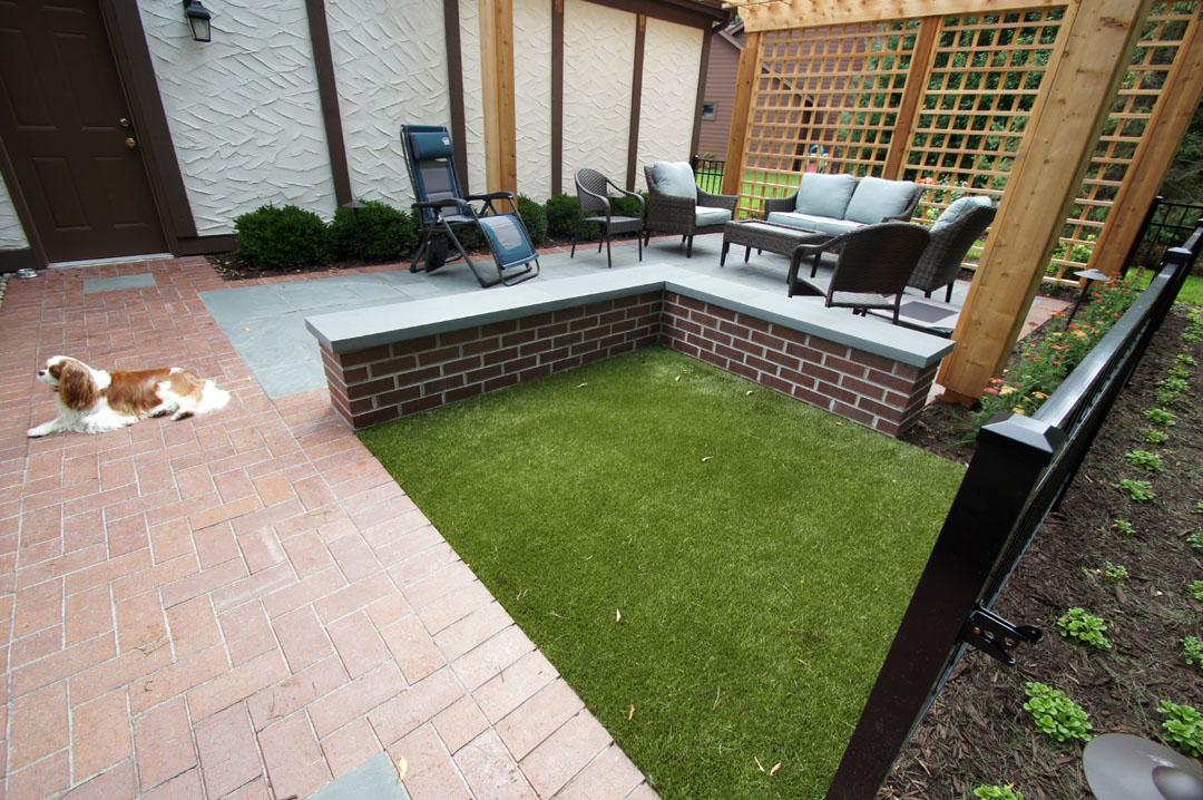 dog grass lawn