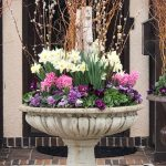 Early Spring Containers Going Out Soon!
