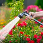 6 Tips To Have Your Garden Survive Extreme Heat