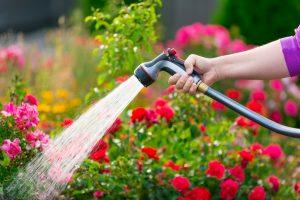 watering a garden - tips for summer gardening